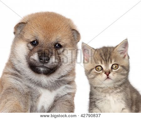 Puppy And Kitten, Close-up Portrait
