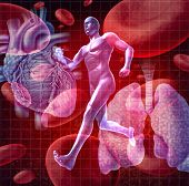 stock photo of internal organs  - Cardiovascular system as a health care and medical concept with a human heart and lungs on red blood cells and an athlete runner as a physical fitness symbol for a healthy lifestyle - JPG
