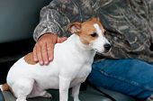 Jack Russell Terrier, Mans Best Friend