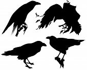 stock photo of raven  - raven birds detailed vector silhouettes  - JPG