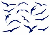 stock photo of baby goose  - Seagull silhouettes in the sky and nature - JPG