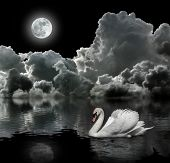 White swan at night under the moon