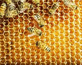 pic of beehive  - Close up view of the working bees on honey cells - JPG