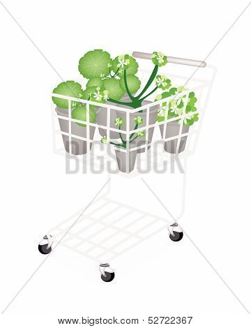 A Set Of Asiatic Pennywort In A Shopping Cart