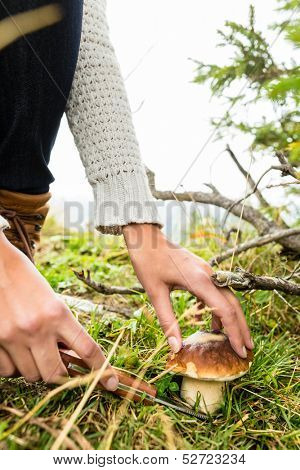 Mushrooms - young woman looking and searching for porcini in the mountains