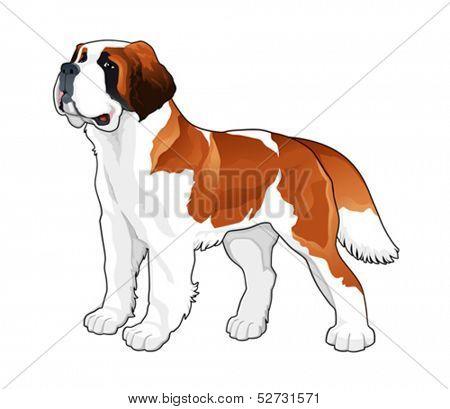 Saint Bernard. Vector isolated dog.