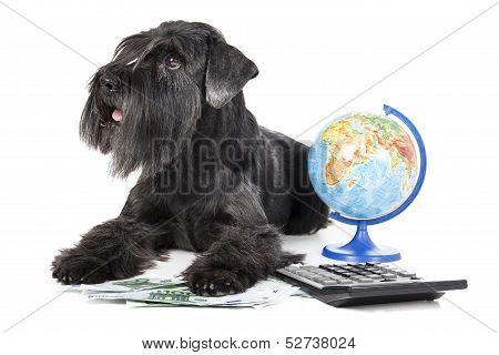 Dog With A Globe