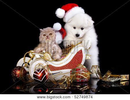 White dog spitz  and kiten Persian  wearing a santa hat, kiten and puppy