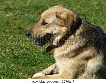 Sitting Dog