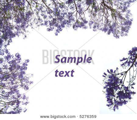 Violet Flowers Framework