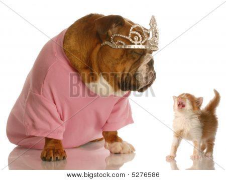 Bulldog Wearing Tiara With Kitten Meowing