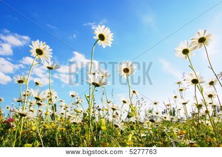 Flower In Summer Under Blue Sky