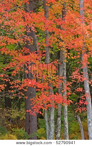 Northwoods Autumn