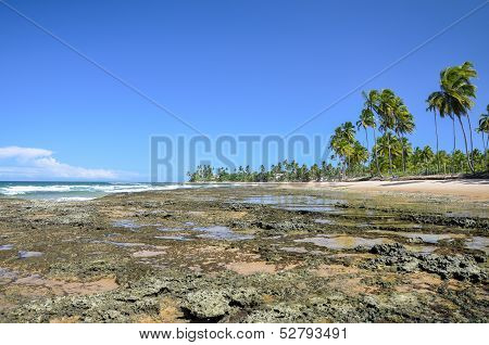 Beach At Low Tide (Brazil)