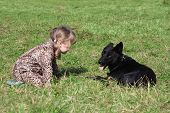 picture of overcoats  - Little girl in overcoat squats on grass with black dog at autumn day - JPG