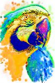 Illustrated Macaw... poster