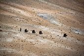 stock photo of nomads  - Nomad Life - JPG