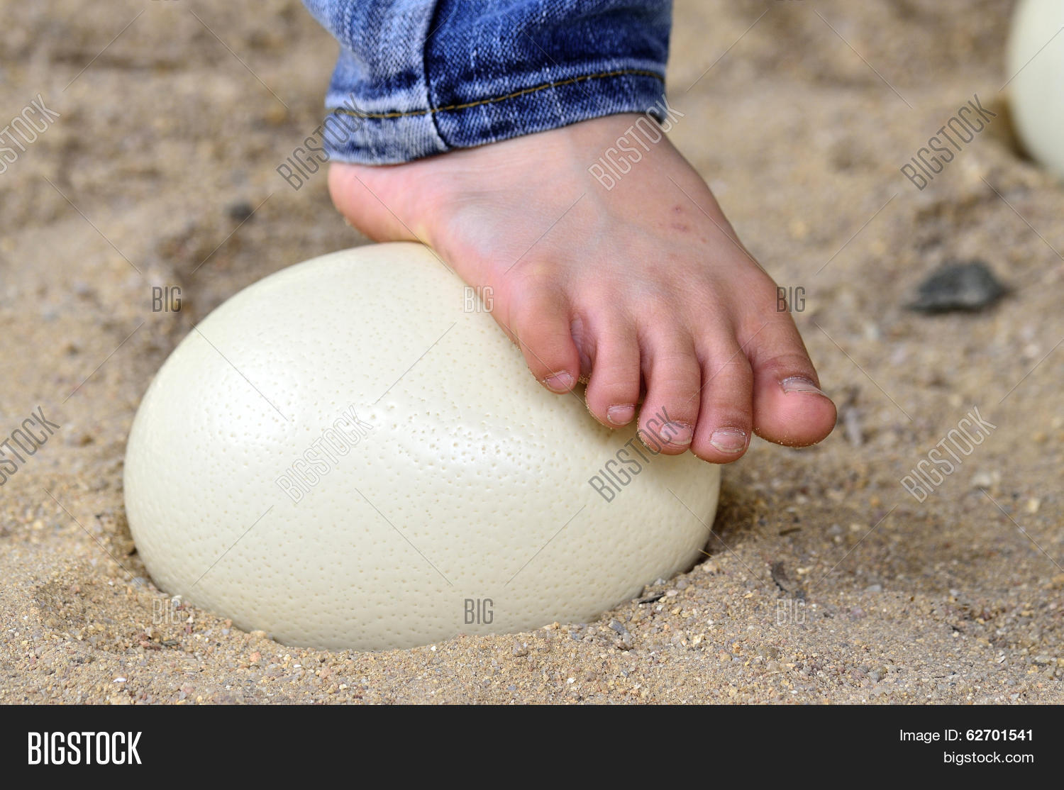 Ostrich Egg Is Strong Enough To Step Up With Feet On Its, No ...