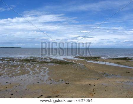Cairns Esplanade Mud Flats