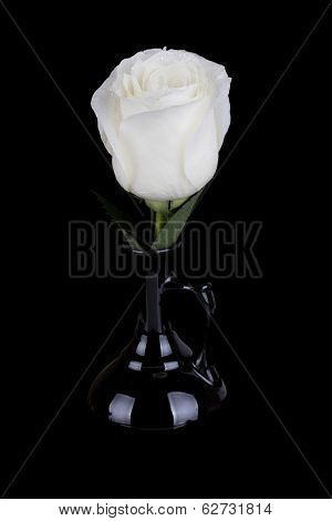 Amazing White Rose In Black Vase On Black Background