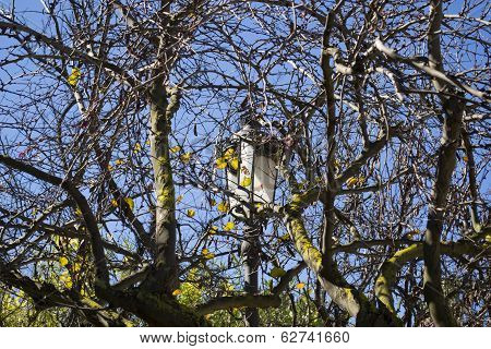 Streetlight between branches