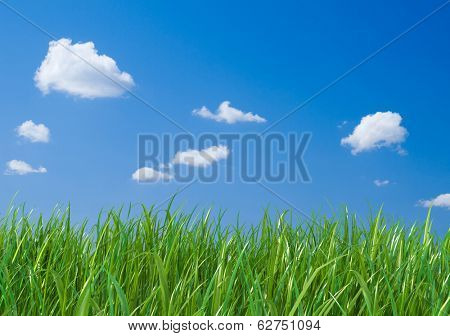 Green grass on blue sky background.