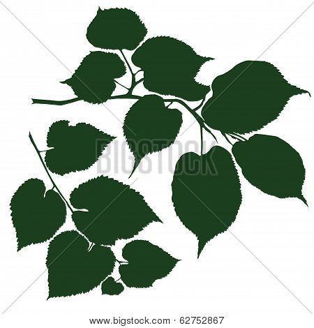 Branches Linden