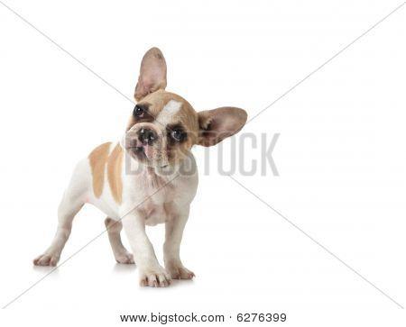 Perro cachorro curioso con copia espacio