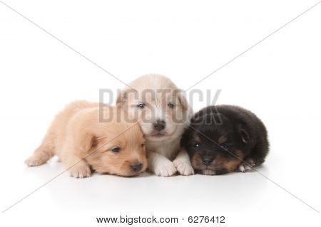 Tired Sweet And Cuddly Newborn Puppies