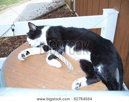 Cat sleeping in the sunlight