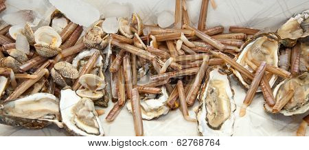 Razor Clams With Oysters On Ice