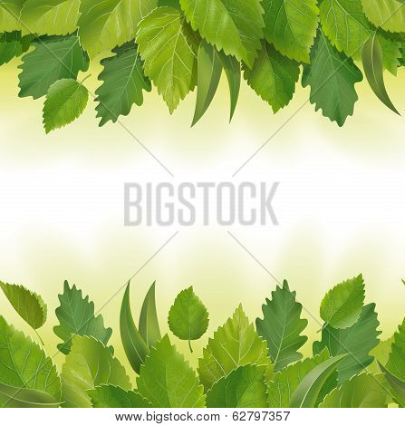 Composition of the leaves (birch, oak, eucalyptus)