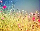 pic of wildflowers  - a field of wildflowers done with a retro vintage instagram filter - JPG