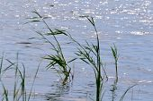 foto of snipe  - Summer in steppe and on lake sprouts many colour - JPG
