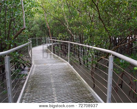 Mangrove Boardwalk, East Point Reserve, Darwin, Australia