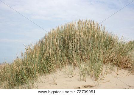 Düne  Dune