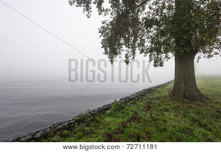 Tree On A Foggy Morning On The Edge Of A River