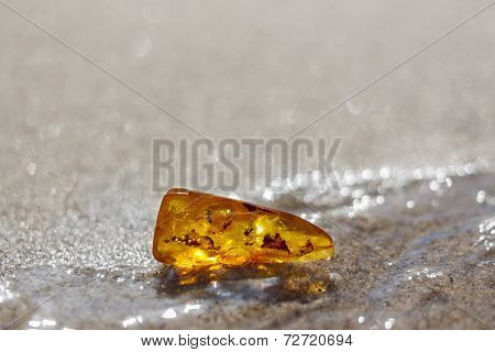 Amber Stone Water Sand Beach Insect Inclusion