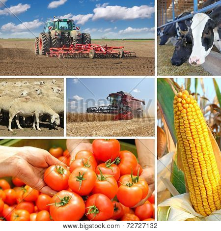 agriculture and food production in the Explore data that can help inform agriculture investment, innovation and policy strategy if you're interested in agricultural production, food security, rural development, nutrition, natural resources, regional food systems, this page is for you.