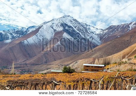 Grape Vines And Mountains