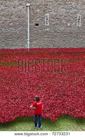 A Volunteer At The Tower Of London Poppy Installation