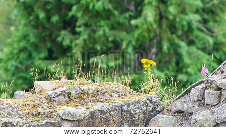 Small Flowers Growing Along The Old Brick Wall