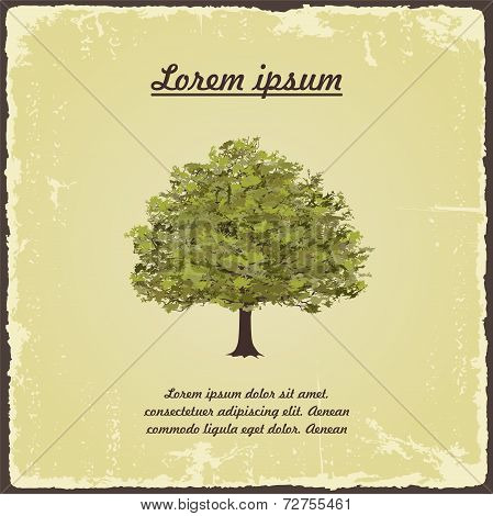 Old tree on vintage paper. Vector