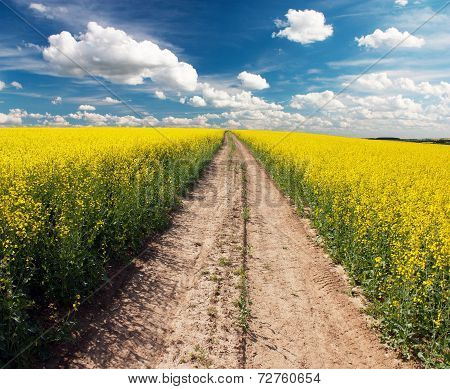 Country Road Across Rape Field