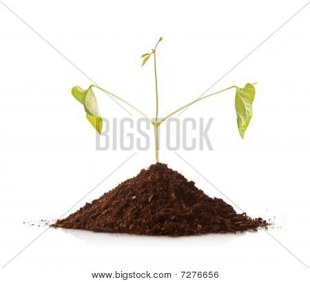 Green plant growing from a pile of soil