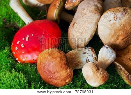 Mushrooms Laying On A Moss In Autumn Forest