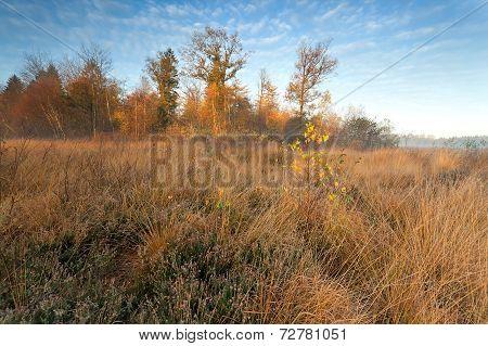 Gold Misty Sunrise In Autumn