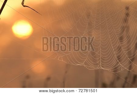 Sun And Spiderweb