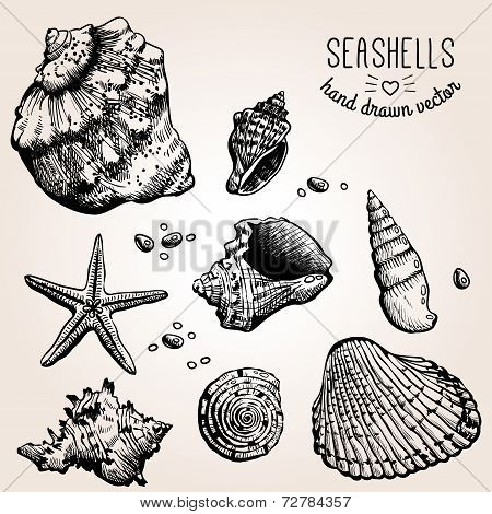 Hand drawn collection of various seashell illustrations.