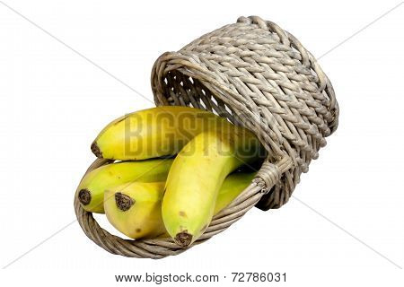 Four Ripe Bananas Spilling From An Overturned Wicker Basket